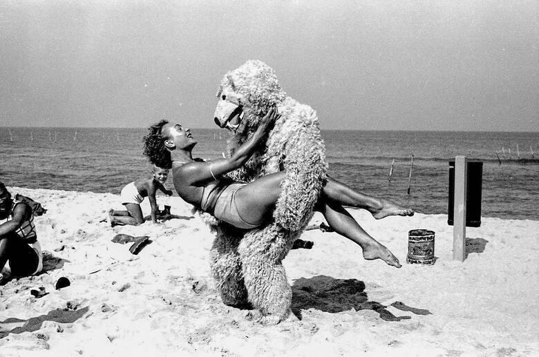 Czy często miś bywał na plaży?
